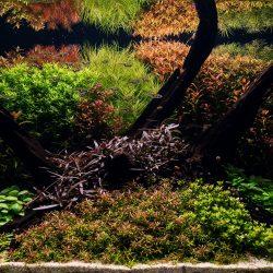Holland Pflanzenaquarium